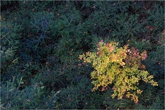 Baumwipfelpfad -- Baumwipfelpfad