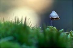 -- Ein Männlein steht im Walde ...