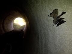 IMG 20121013 00100 1000 -- Pfauenaugen dichtgedrängt im Ruhequartier unter der B16