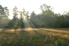 2012 08 14 070802 WBO 7006 1000 -- Morgens um 7 in den Donauauen