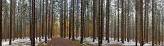 Am Reisberg -- Herbstwald mit Schnee am Reisberg, im Hintergrund leuchtet der herbstliche Laubwald durch