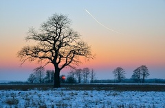 2012 02 12 172230 WBO 2610 -- Freistehende Eiche im Feilenmoos