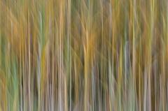 2012 09 26 WBO 8985 -- Schilf abstrakt