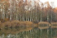 2012 11 24 153345 WBO 1374 -- Westufer am Schachtweiher