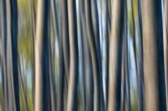 Verwischte Baumstaemme -- Verwischeffekt mit Baeumen in den Donauauen