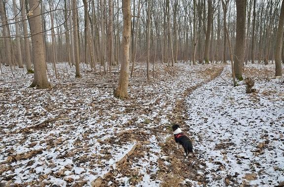 Pfad durch den Auwald