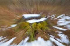 Eichenbaumstumpf -- Eichenbaumstumpf