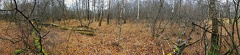 2012 11 23 114240 WBO 1304 2000 -- Natürliches Chaos Hier darf die Natur noch Natur sein