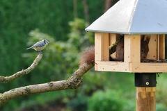 """Eichhörnchen besetzt Futterhaus -- """"Wann geht denn der endlich ???"""""""