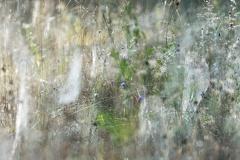 2013 08 11 075259  WBO8965 9 1000 -- Kein Durchkommen! Netze der Wespenspinnen