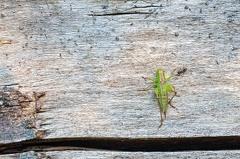 2013 08 18 092209  WBO9190 12 1000 -- Die Ameise checkte mal kurz ab ob dies was verwertbares ist. Jedoch war die Schrecke dann doch ein wenig zu groß für eine Ameise