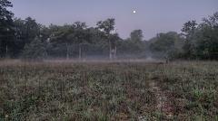 2013 08 22 051256 WBO 8993-HDR(3) Default 1 1000 -- Gespenstische Stimmung vor Sonnenaufgang