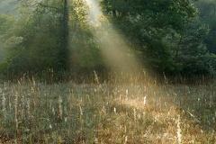 2013 08 22 063141 WBO 9026 3 1000 -- Morgenlicht auf der Brenne