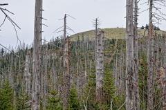 2013 11 01 163237  WBO0202 32 1000 -- Blick aus dem Hochwaldsteig auf den Lusengipfel