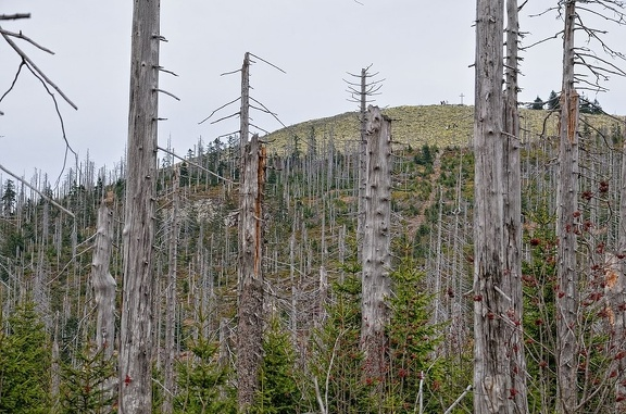 Blick aus dem Hochwaldsteig auf den Lusengipfel