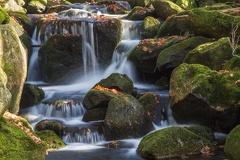 Kleine Ohe im Bayrischen Wald -- Kleine Ohe im Bayrischen Wald