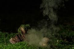 Flaschen-Stäubling (Lycoperdon perlatum) -- Flaschen-Stäubling (Lycoperdon perlatum)