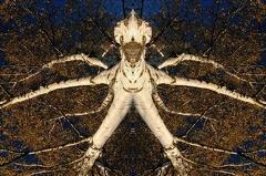 WBO 2959 02 6 1000 -- Baumgeist aus einer Spiegelung