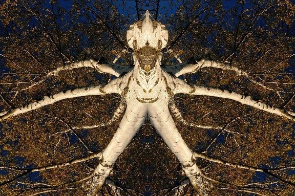 Baumgeist aus einer Spiegelung