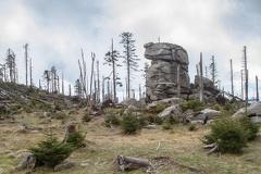 Granitfels und Totholz am Dreisesselberg -- Granitfels und Totholz am Dreisesselberg