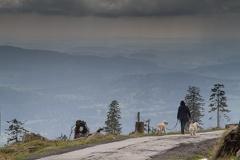 Blick in Tal vom Dreisesselberg -- Blick in Tal vom Dreisesselberg