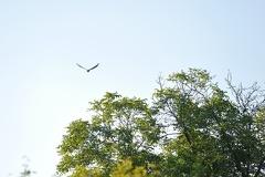 Kuckuck -- Unser Kuckuck fliegt in die Freiheit