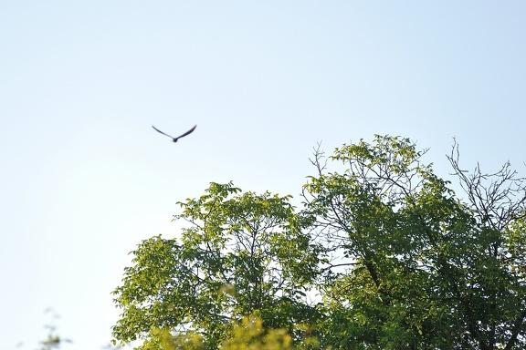 Unser Kuckuck fliegt in die Freiheit