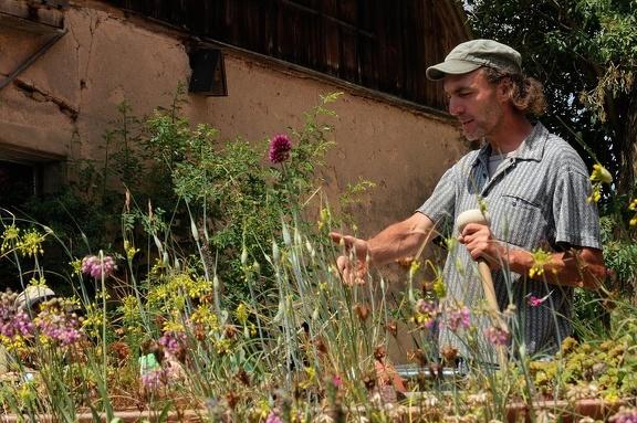 Hortus Insectorum bei Markus Gastl