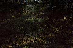 Glühmürmchen (Lampyridae) -- Glühmürmchen (Lampyridae)