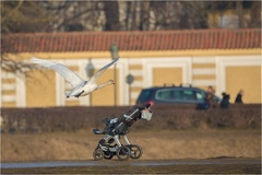 2017_02_11_1615_Canon EOS 5D Mark IV_AZ0A8443_WEB -- Höckerschwan (Cygnus olor)