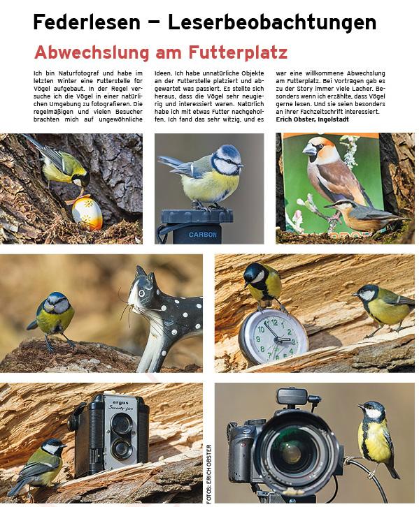 Vögel-Zeitschrift-Artikel